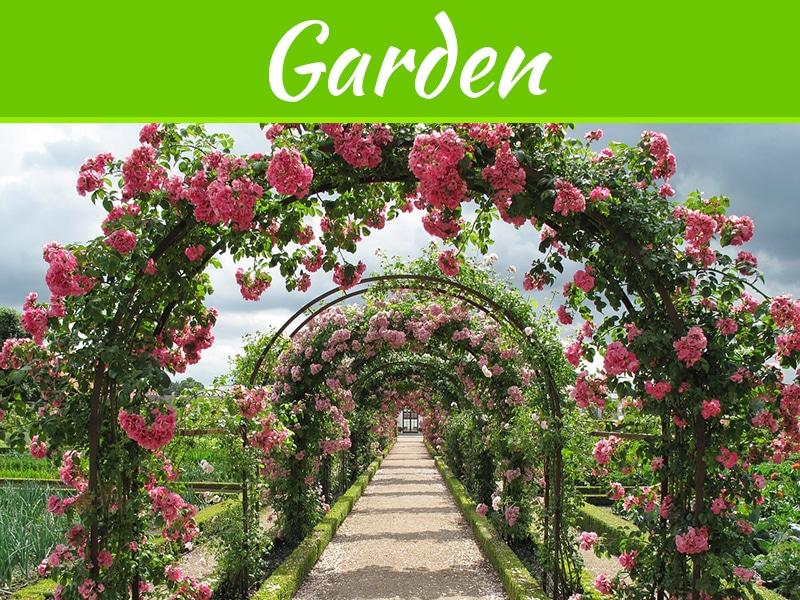 3 avantages pour cultiver une roseraie