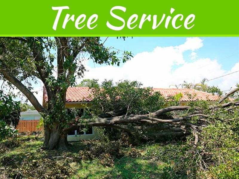 3 signes que vos arbres ont besoin de TLC