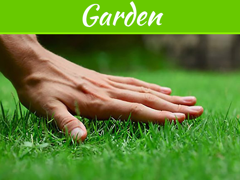 Pourquoi l'entretien de la pelouse est si important pour l'apparence de votre maison