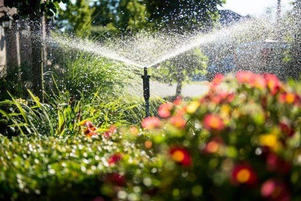 Best Watering Techniques