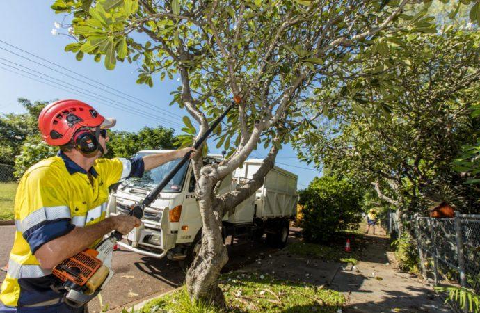 Conseils pour l'enlèvement d'arbres de bricolage avec les outils des droits et des connaissances