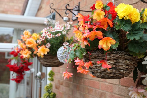 Flowers That Grow In Hanging Baskets