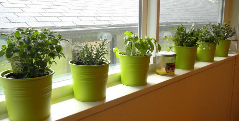 Indoor Vegetable Garden