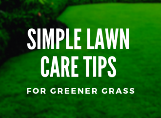 Conseils simples d'entretien de pelouse pour un gazon plus vert