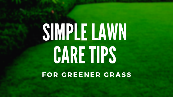 Simple Lawn Care Tips For Greener Grass