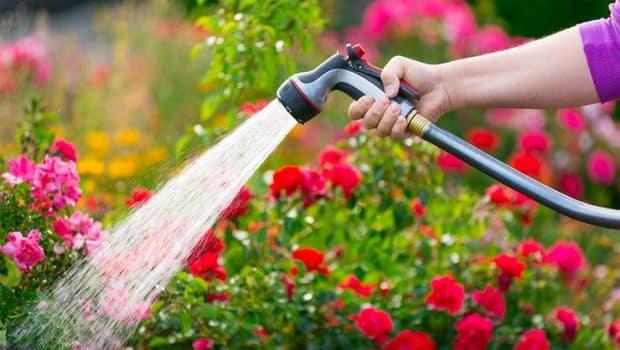 Watering Intervals