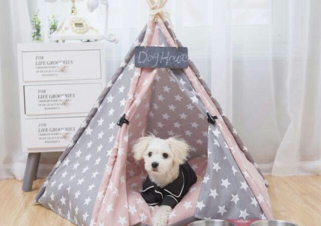Comment mettre en place un espace confortable et agréable à regarder pour le chien de la famille dans votre maison