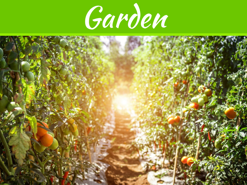 Conseils d'experts concernant le type de jardinières idéal pour les plantes de tomates
