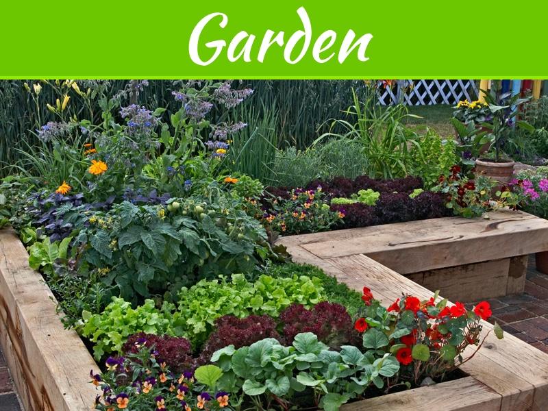 Les meilleures plantes pour les petits jardins