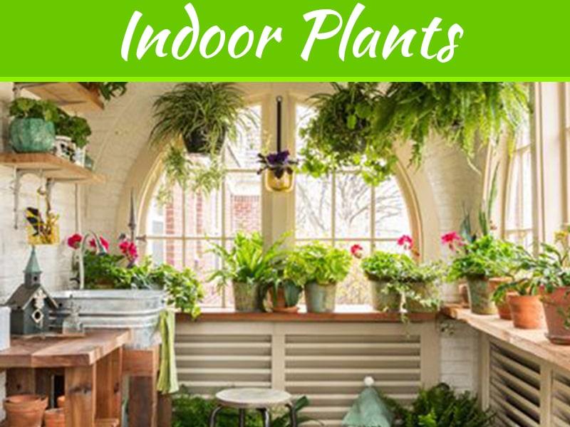 Choses à considérer pour embellir votre jardin intérieur