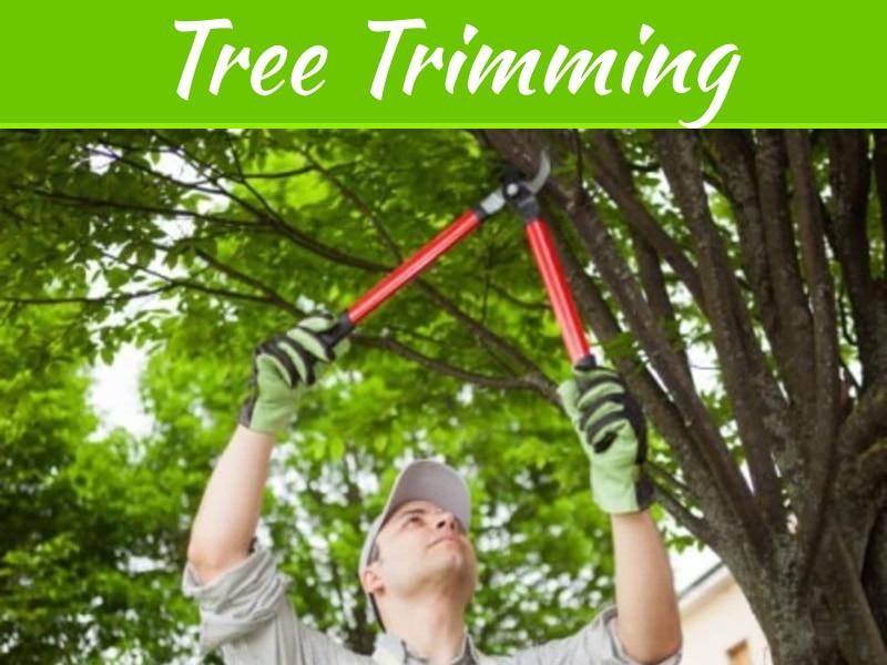 Conseils pour trouver une entreprise d'élagage d'arbres Houston pour vos besoins en arbres